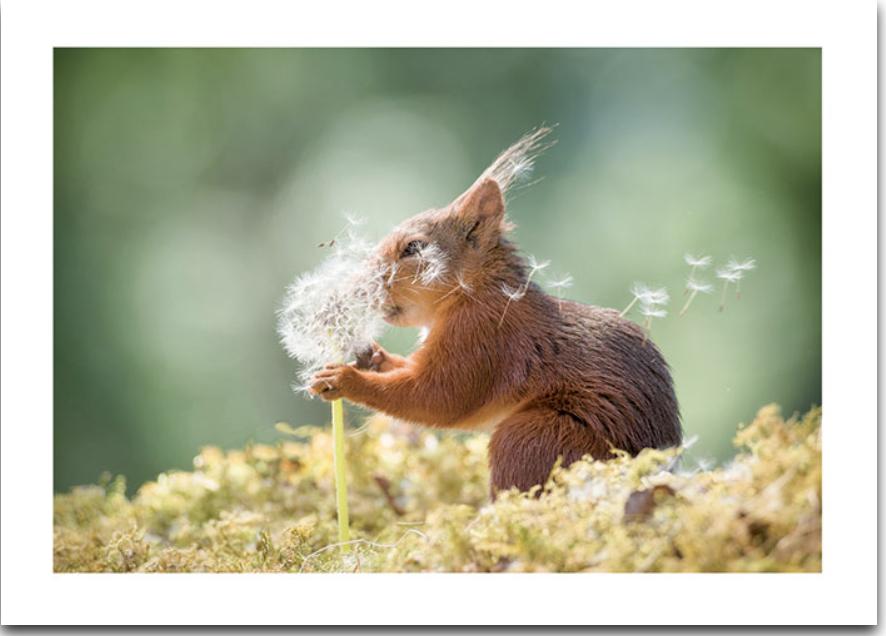 Dandelion Wish Squirrel Card