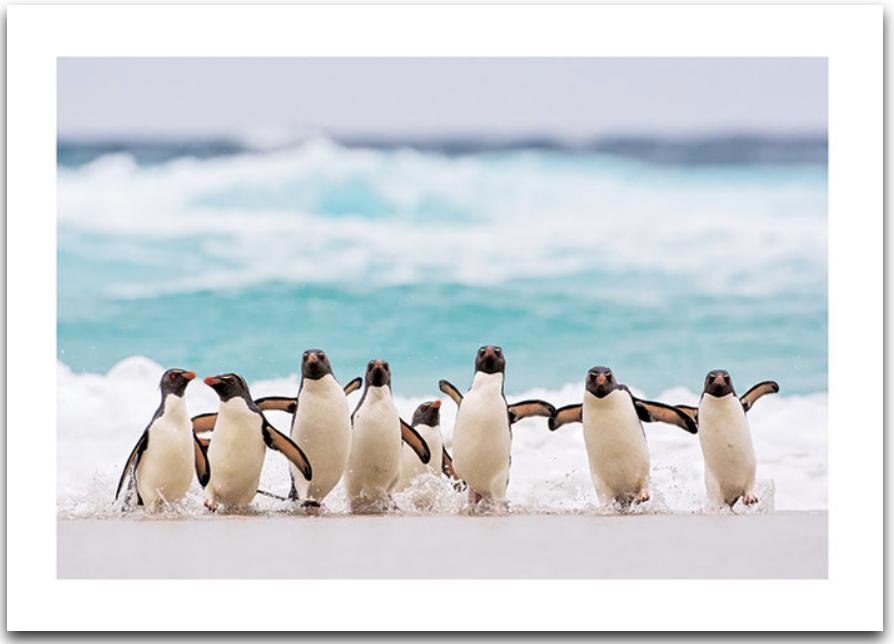 Penguins On Beach Card