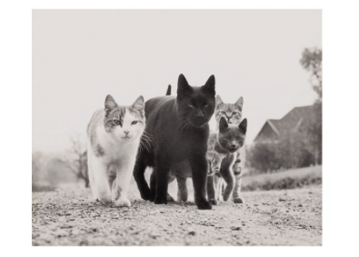 Gang of Cats - VE 6