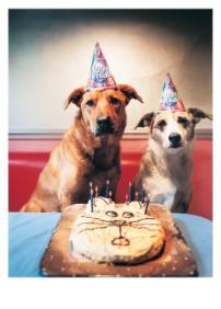 Dogs & Cat Cake - VE