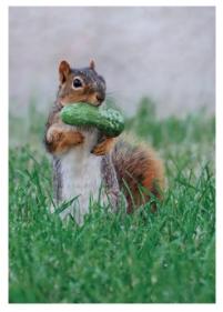 Squirrel Pickle - VE 6