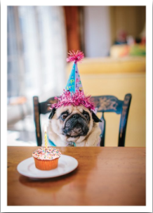 Pug Cupcake - VE 6
