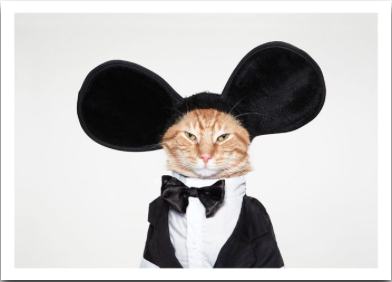Cat Mouse Ears - VE 6