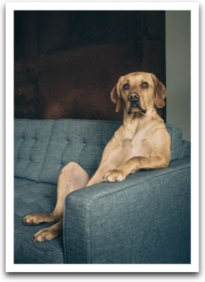 Dog On Couch Card