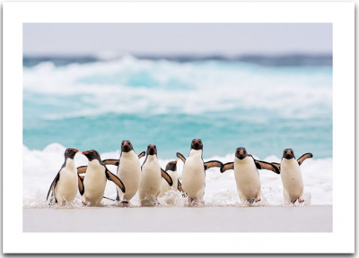 Penguins On Beach Card