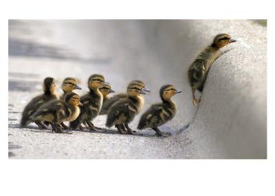 Ducklings Card - Palm Press