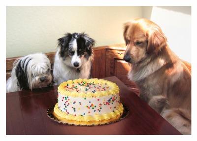 3 Dogs & Cake Card -