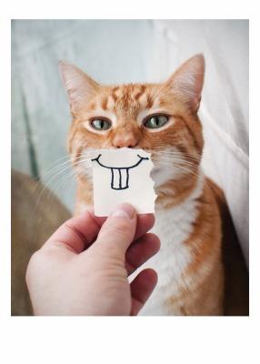 Cat Teeth Card - Palm Press