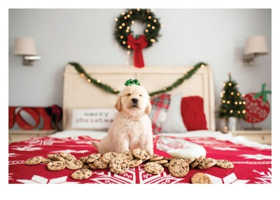 Dog Cookies Bed Card Palm Press