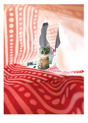 Cat Wrapping Paper Card Palm Press