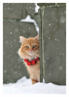 Cat Red Collar Card Palm Press