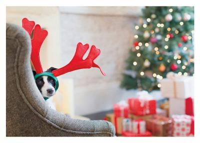 Dog Reindeer Card - Palm Press