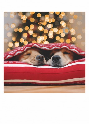 Two Dogs Xmas Lights Card Palm