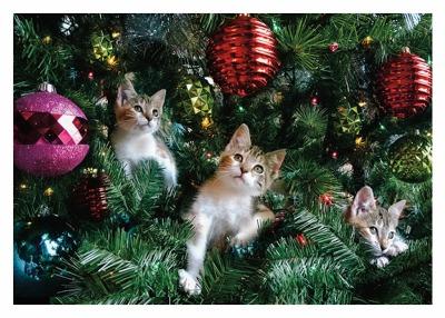 Kittens in Xmas Tree Card Palm