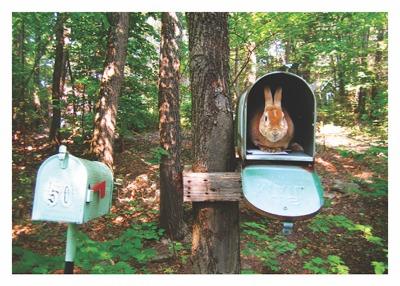 Bunny Mailbox Card - Palm Press