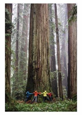 Tree Hugging Card - Palm Press