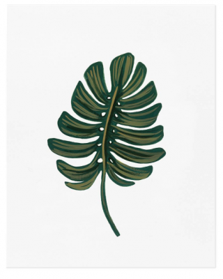 Monstera Leaf - VE2