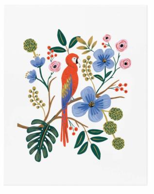 Macaw - VE2