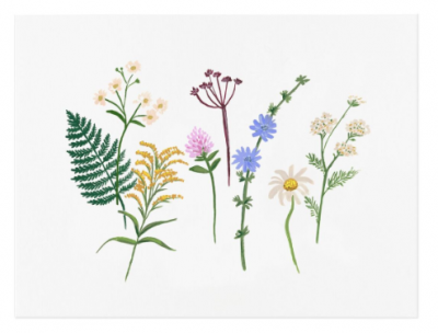 Wildflowers Art Print Rifle Paper Co